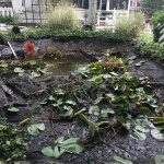 lily garden makeover